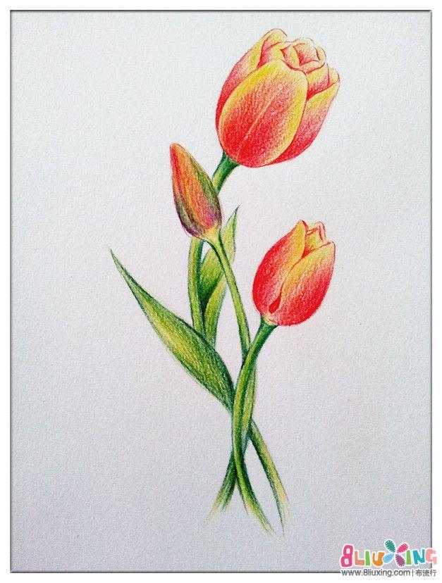 郁金香铅笔画,郁金香画,郁金香素描画_点力图库