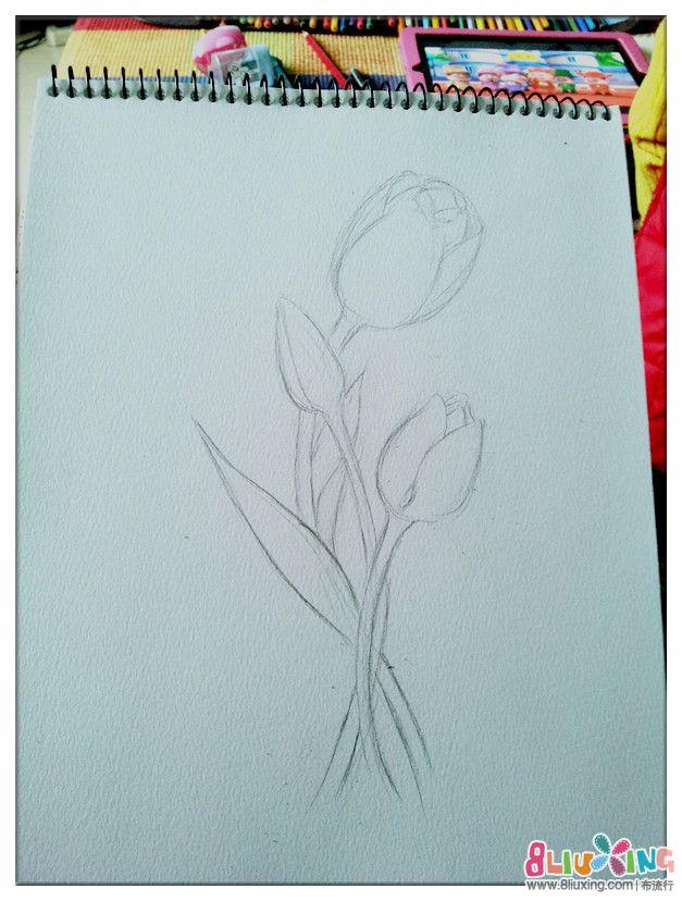 一 次 彩 铅 尝试 郁金香 手绘 彩 铅 花卉 插画 彩 铅 ...