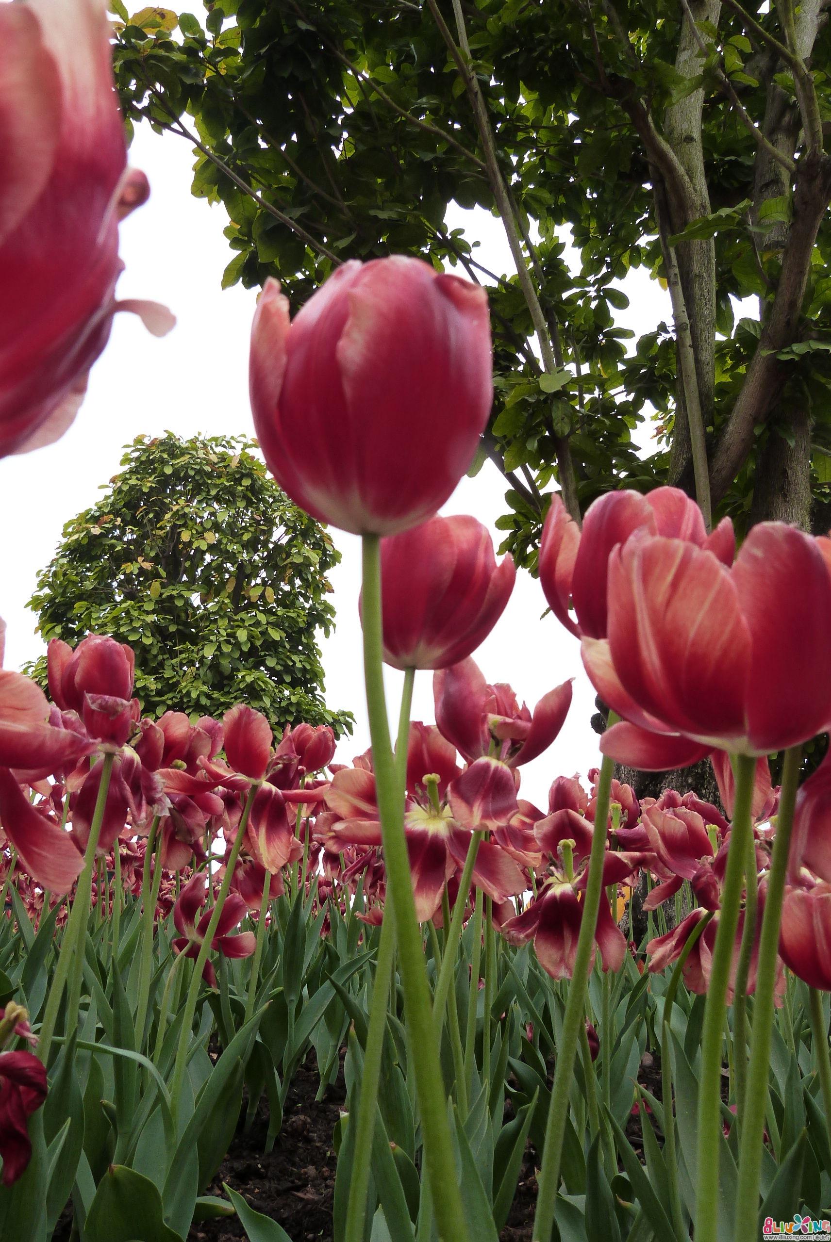 【春】路上风景---兰舟