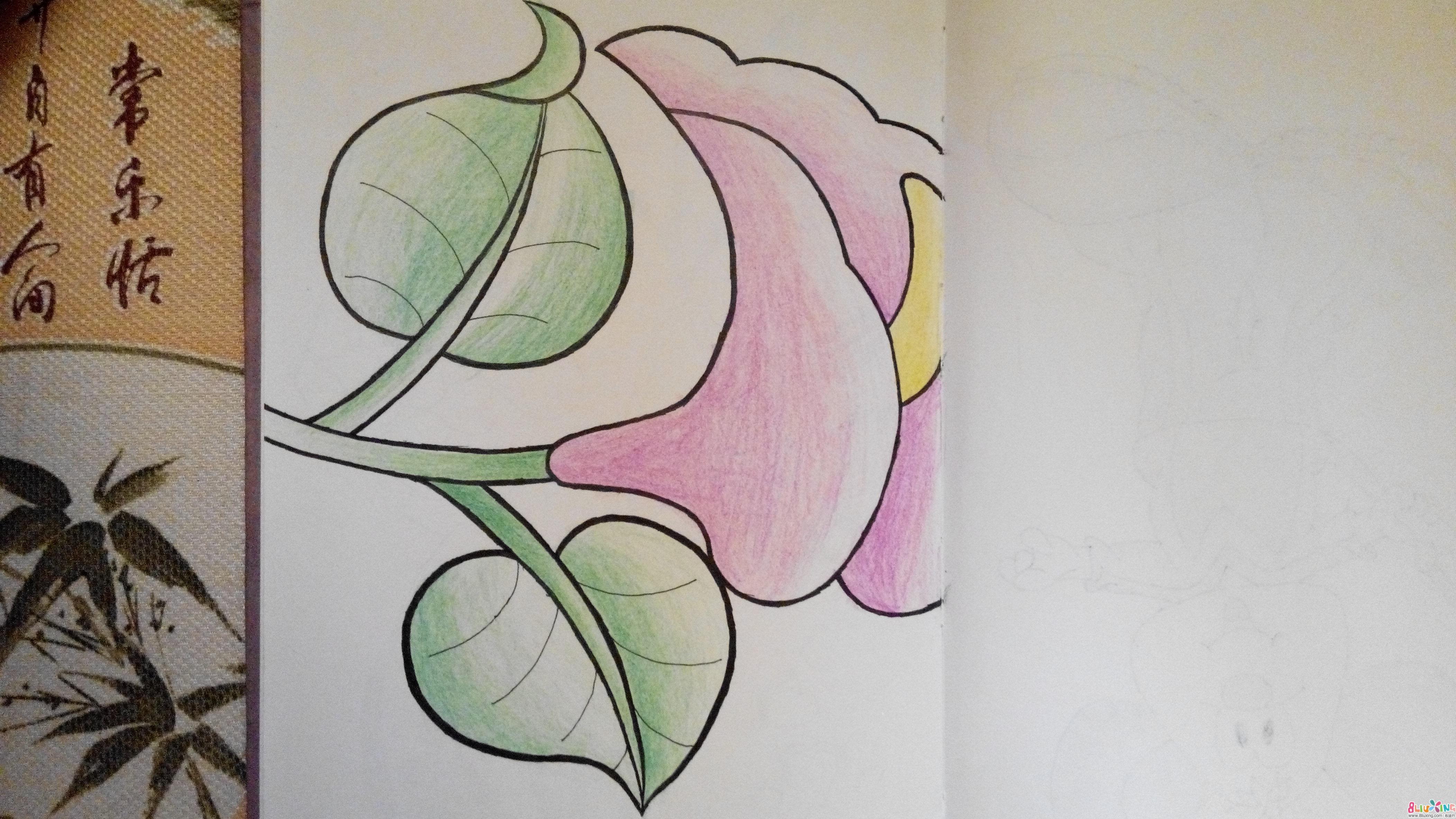 彩铅花卉素描图解图片大全_彩铅花卉素描图解图片 ...