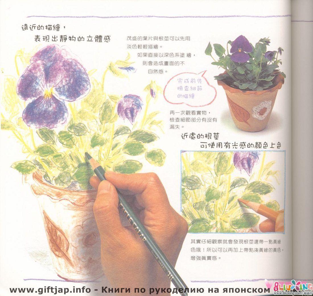 色铅笔的花花世界,彩铅的教程有人会喜欢吗